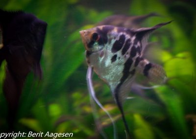 akvarie12-2