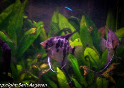 akvarie12-3