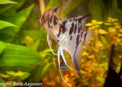 akvarie12-4