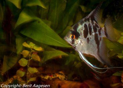 akvarie12-5