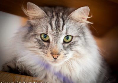 katte-2