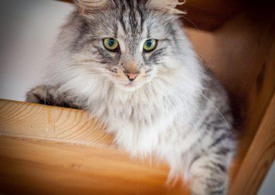 katte-3