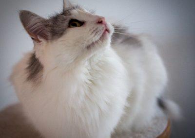 katte-4