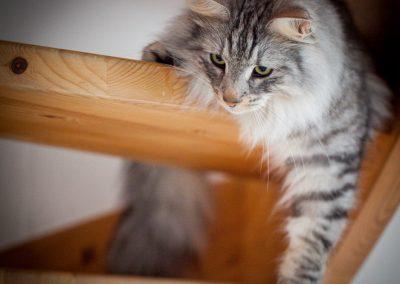 katte-5