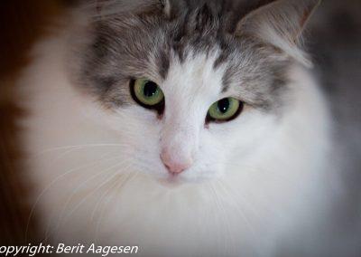 katte-6
