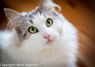 katte-7